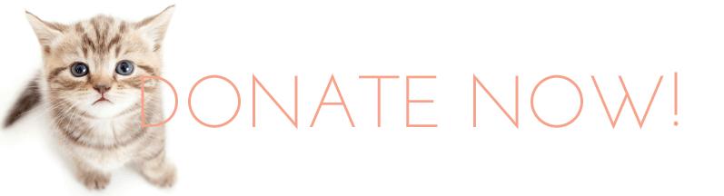 donate-now-kitten-banner