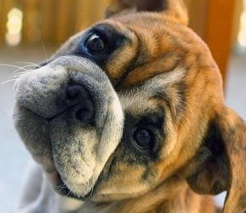 A dog's plea for help sad puppy eyes pleading