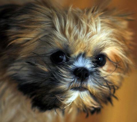 sweet little puppy dog