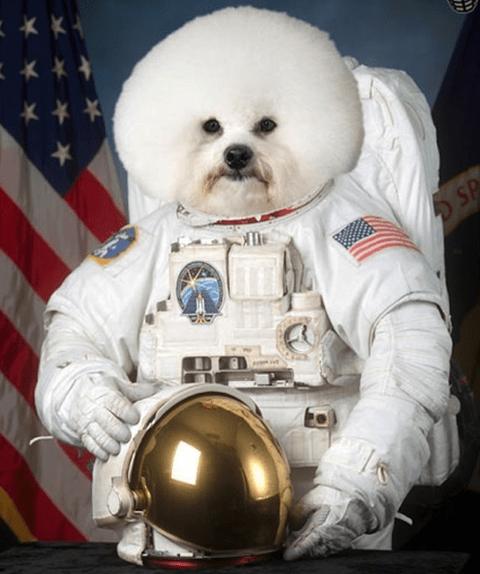 Space cowboy dog