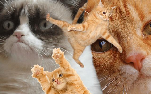 J'ai enfin adopté un chat avec une asso strasbourgeoise (et ce n'est pas la SPA)