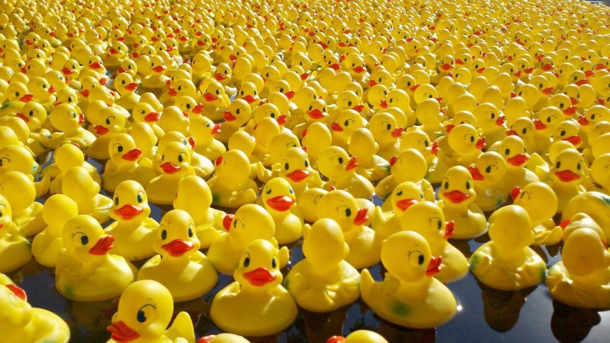 Invasion de 15 000 canards en plastique ce samedi dans les eaux de l'Ill