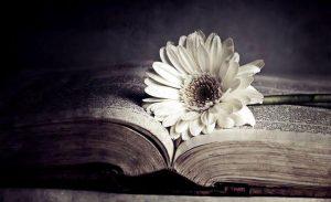 Zbog nas, cvet, knjiga, tama