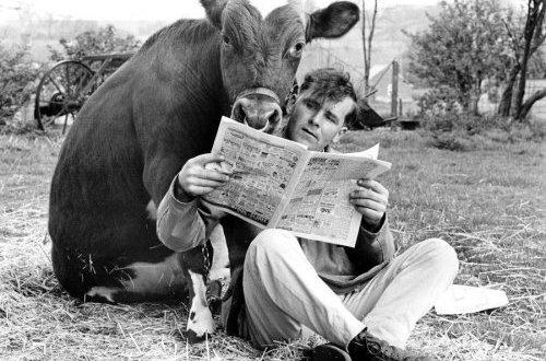 Čovek i goveče - John Drysdale