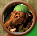 avatar perro