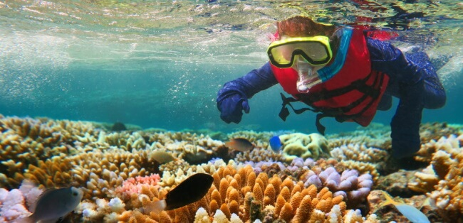 Scuba diving and exploring the Great Barrier Reef