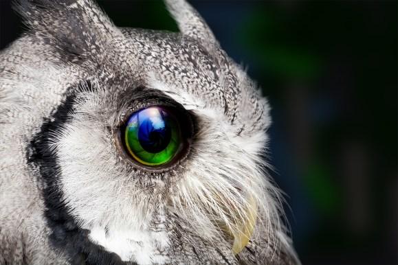 Side profile of an owl Polaris