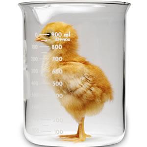 chick beaker