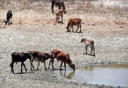 Nordeste terá pior seca dos últimos 100 anos