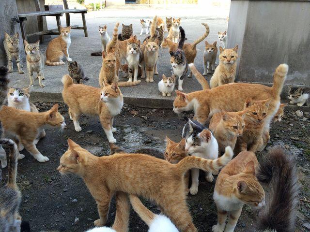 gatos 2 - Ilha no Japão tem mais habitantes gatos que humanos