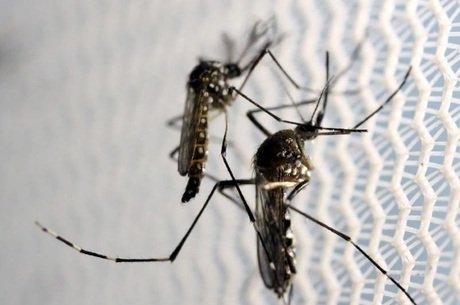 mosquito - Ministro da Saúde confirma teste rápido contra Zica e dengue para março