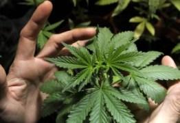 LIBERADA MACONHA COMO REMÉDIO:  Anvisa autoriza prescrição de remédios com canabidiol e THC no país