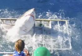 VEJA VÍDEO: Tubarão invade gaiola e mergulhador escapa por pouco