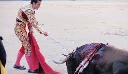 TOURADA E TORTURA: O touro está prostrado, exausto e domado. O toureiro mata-o . SALVE A VAQUEJADA – Por Eilzo Matos – VÍDEO