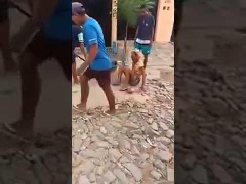 video mostra travesti dandara a - Filme sobre o assassinato da travesti Dandara estreia em São Paulo - VEJA VÍDEO