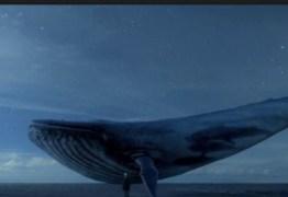 Baleia Azul: 101 casos serão investigados a partir de segunda