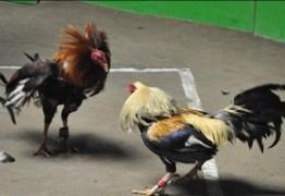 VEJA VÍDEO: 'eu amo ver um galo brigando com outro' afirma vereador durante sessão