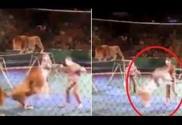 VEJA O VÍDEO: Leão ataca e quase mata treinador durante show em circo