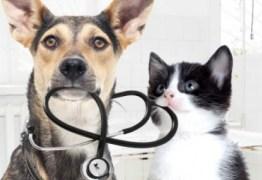 Zoonoses oferece serviços gratuitos para animais domésticos