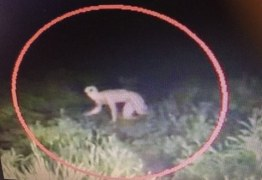 População de Brejo do Cruz relata aparição de criatura desconhecida na cidade