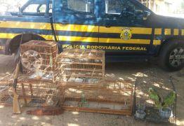 PRF prende fazendeiro por crime ambiental e posse ilegal de arma de fogo em Patos