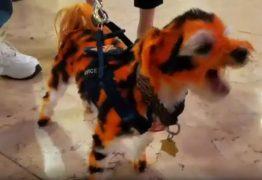 VEJA VÍDEO: Fã de futebol americano 'transforma' cão em tigre