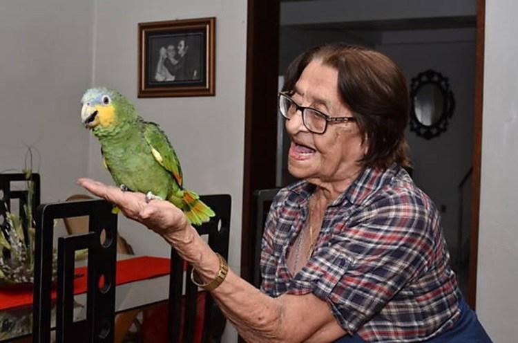 papagaio cajazeiras - FOLHA DE S. PAULO: Ibama recorre mais uma vez à Justiça para apreender o papagaio Leozinho
