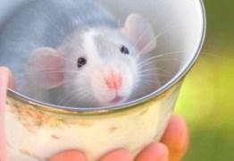 Proteste flagra inseto morto em café Melitta e pelo de rato em farinha Sol
