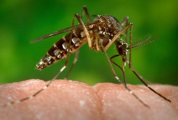 Brasileiros criam biossensor para diagnóstico rápido e preciso de zika