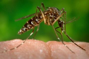 zika virus - Brasileiros criam biossensor para diagnóstico rápido e preciso de zika