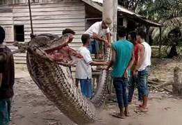 ANACONDA: Homem mata cobra de quase 8 metros