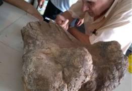 Morador acha parte de osso de dinossauro herbívoro durante obra