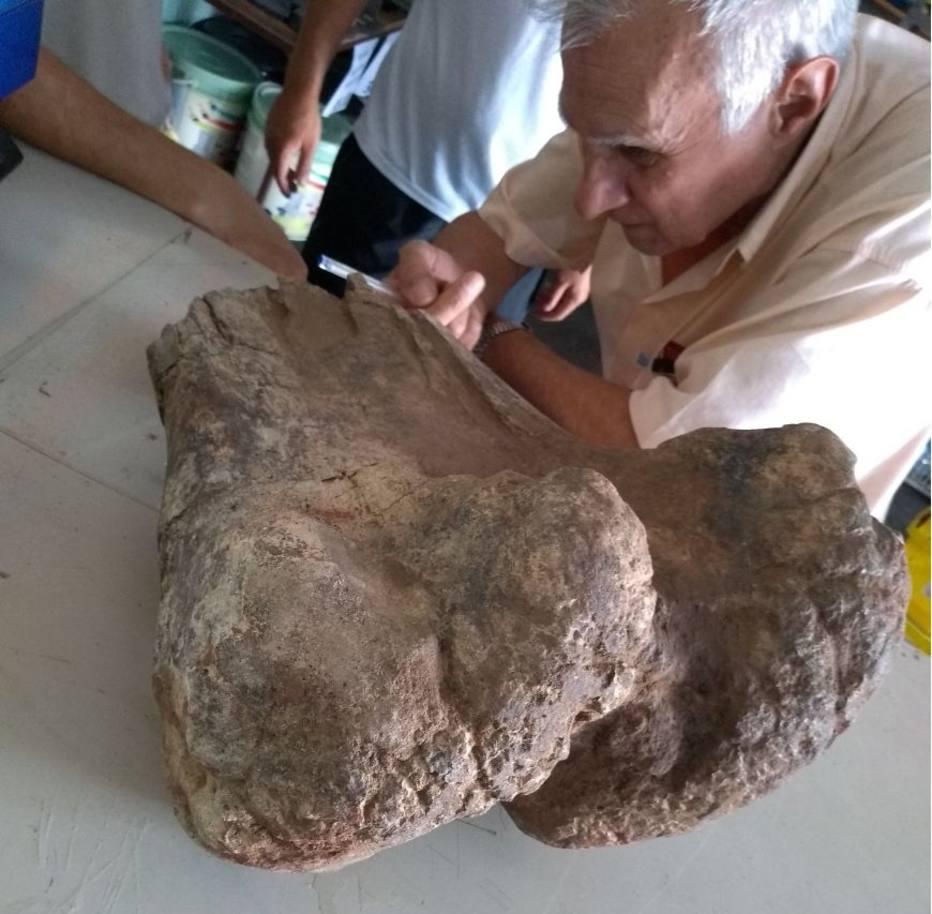 1511897544800 - Morador acha parte de osso de dinossauro herbívoro durante obra
