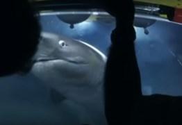 VEJA VÍDEO: Tubarões gigantes atacam tripulação de submarino
