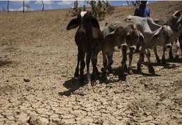 Prefeitos esvaziam evento convocado para o combate à seca
