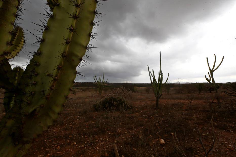 semiárido - Mudança do clima pode dobrar perdas no semiárido