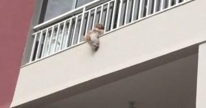 cadelinha janela 300x157 - Moradores de prédio se unem para salvar cadela que caiu de janela