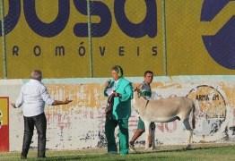 Time do Sousa pode ser punido por permitir entrada de jumento em estádio