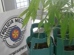 Pacientes cultivavam maconha em hospital
