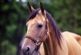 VEJA VÍDEO: homem montado em cavalo assalta pedestre em João Pessoa
