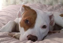 Após ser rejeitado 5 vezes, cãozinho surdo aprende língua de sinais