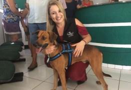 NOVO LAR: Cão que esperou dono quatro meses na frente de hospital é adotado