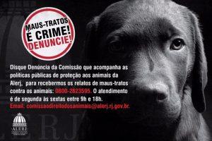 Maus tratos animais 696x464 300x200 - MAUS TRATOS É CRIME: Homem atira em animal e é preso em Juarez Távora