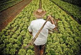 Produção agrícola da Paraíba deve crescer mais de 130% em 2018, diz BNB