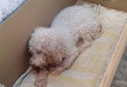 VIOLÊNCIA GRATUITA: Cachorro morre após ser abandonado em tonel de lixo- VEJA VÍDEO