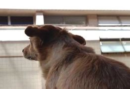 FIDELIDADE: Cadela espera há uma semana na porta de hospital por dono que morreu
