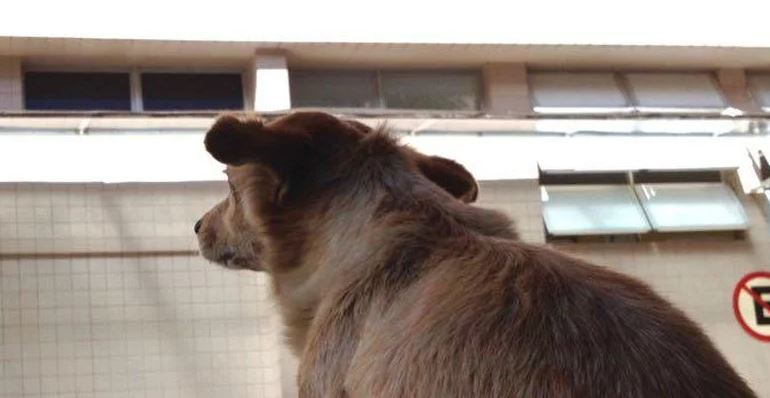Capturarl 1 - FIDELIDADE: Cadela espera há uma semana na porta de hospital por dono que morreu