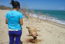 IRRESPONSABILIDADE ? Peixe-boi marinho é atropelado na Paraíba