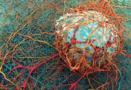 AVANÇO DA CIÊNCIA: Nova droga pode fazer o sistema imunológico 'devorar' tumores