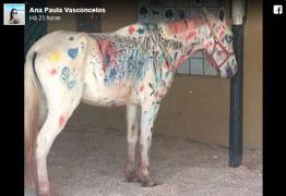 Cavalo pintado por crianças levanta acusações de maus-tratos